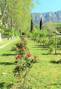 jardin-remarquable-baudouvin-valette-var-sortie-famille-enfants-83-nature-parc