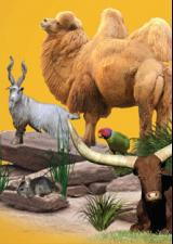 zoo-parc-cannet-maures-animaux-sortir-var-83