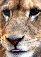 zoo-mont-faron-fauverie-toulon-animaux