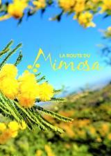 route-mimosa-sortie-famille-var-balade-enfants-decouverte-83-randonnee